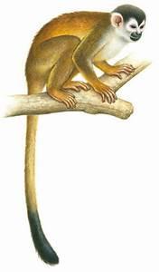 Nuestro aula: El tucán, el manatí y el mono ardilla amarillo