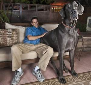 Wonders Book: World's Biggest Dog: George, 230-Pound Great ...