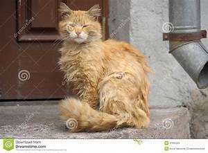 Homeless Cat Stock Photos - Image: 31692023