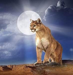 Download Mountain Lion HD Wallpaper Gallery