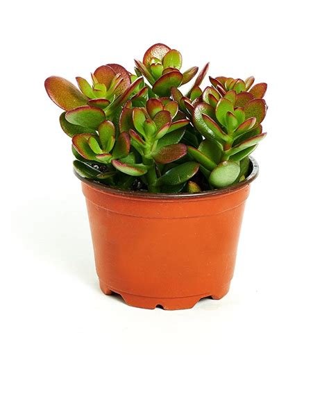 the best and easiest indoor houseplants that won t die you