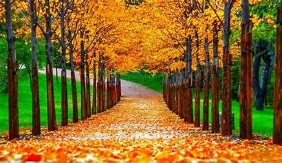 Fall Autumn Pretty October Nature Nice Colorful