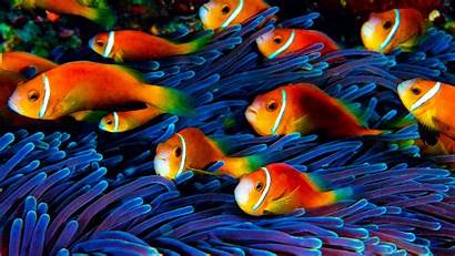 Underwater Fish Desktop Sea Turtle Wallpapers Swimming