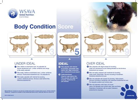 pet   healthy weight