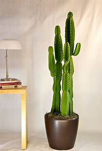 Pot A Cactus : best 25 indoor cactus ideas on pinterest indoor cactus plants cactus plants and cactus ~ Farleysfitness.com Idées de Décoration