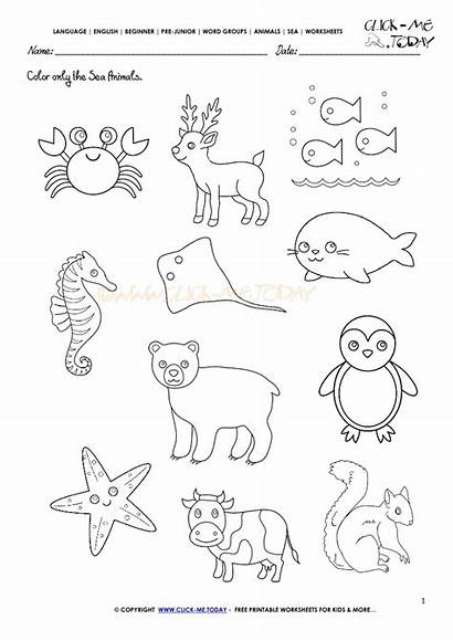 Animals Sea Activity Sheet Activities Worksheet Clipart