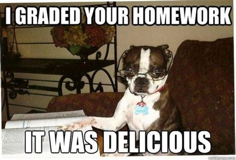 Meme Pictures With Captions - 30 funny animal captions part 10 30 pics amazing creatures
