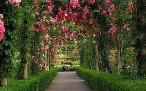 rosa rosa jardín fondos de pantalla HD frescos para ...