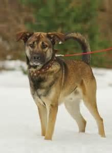 : Pieejamie suņi