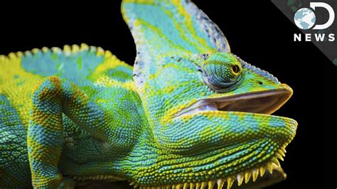 color change how do chameleons change colors