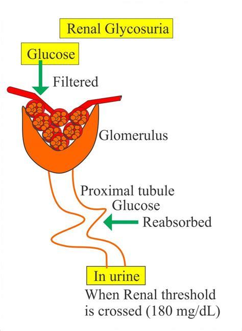 urine analysis part  types  urine samples