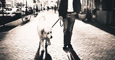 Kisah Persahabatan Manusia Dengan Anjing