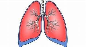 This Is What Happens To Your Lungs  Lungs  And Air When
