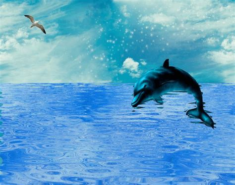 Dolphin Jumping Over Shimmering Sea Blue Ocean Water