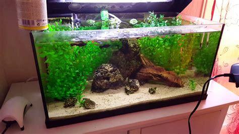 cloche de nettoyage aquarium astuce nettoyage de aquarium