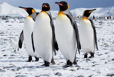 Antarctic Birds Antarctica