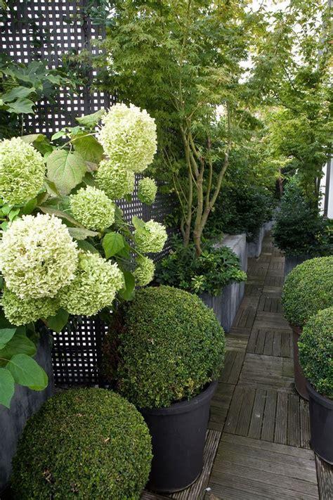 Pflanzen Garten by Bildergebnis F 252 R Kleiner Garten Hortensien Buchsbaum