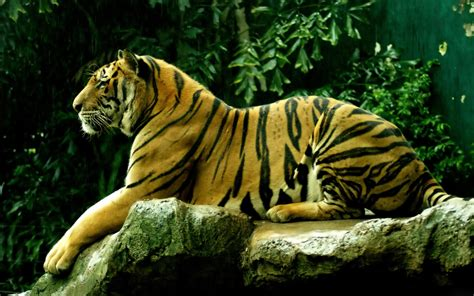 Animal Wallpaper For Pc - www intrawallpaper images hd page 1