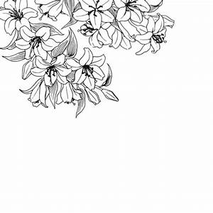 Flower Transparent Background Tumblr   www.pixshark.com ...
