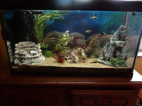 mon poisson reste au fond de l eau forum poisson