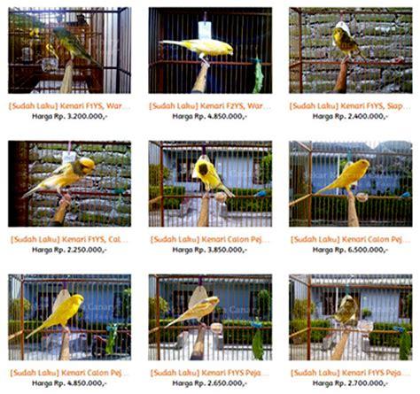 inspirasi dari om anggasona sekar kencana canary bf jogja om kicau