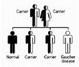 Gaucher Disease - Physiopedia