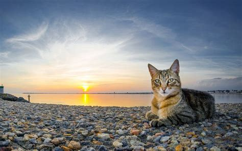 sunrise kitty