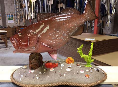 grouper fish base custom mount mounting options graytaxidermy