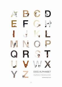 Dog alphabet that i made from the first letters of their for Alphabet photo letters