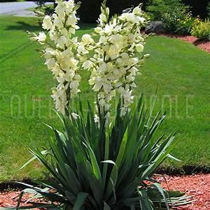 Arbuste Plein Soleil Longue Floraison : quebec photos de plantes et fiches ~ Premium-room.com Idées de Décoration