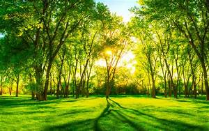 Background pemandangan hutan 1 » Background Check All