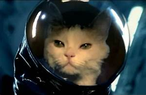 Astronaut Cat - Pics about space