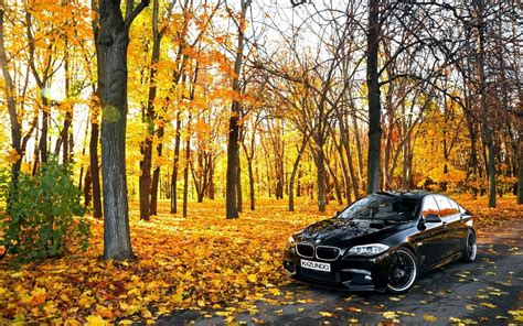 forest car bmw nature road wallpapers hd desktop