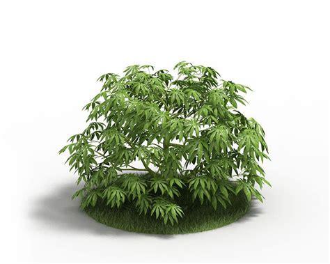 leafy shrubs leafy green bush 3d model cgtrader com
