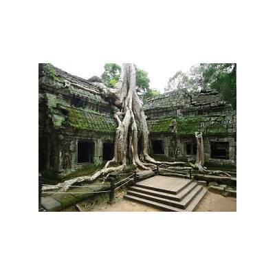 World Wondering: Days 65 to 68: Angkor Temples: Ta Prohm