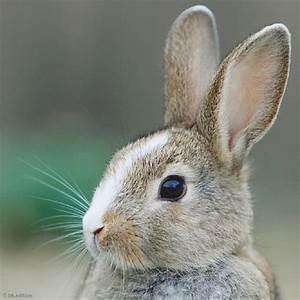 Auf Rechnung Bestellen Bedeutet : die besten 17 ideen zu schlangen auf pinterest reptilien und rosa tiere ~ Themetempest.com Abrechnung