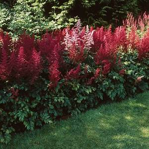 Schattenpflanzen Garten Winterhart : rot bl hende schattenpflanzen sorgen f r farbe in sonst ~ Lizthompson.info Haus und Dekorationen