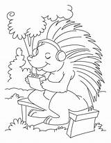 Porcupine Coloring Pages Listening Sheets Drawing Line Colouring Bestcoloringpagesforkids Printable Porcupines Worksheets Crested Getdrawings Animal Getcolorings sketch template