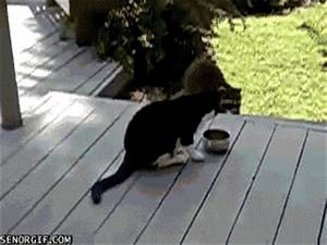 9 Funny Gifs of Animals Stealing Food - Dose of Funny