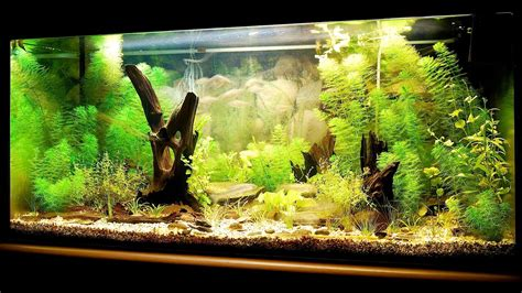 fish aquariums tropical fish tank care aquarium care for
