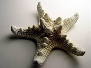 Comment Faire Une étoile En Papier : comment faire une toile en papier m ch ~ Nature-et-papiers.com Idées de Décoration