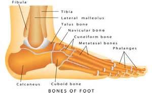 Broken Foot Bones Diagram