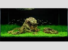 A collection of beautiful aquascapes – Kristelvdakker