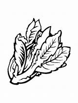 Lettuce Coloring Pages Vegetables Recommended sketch template