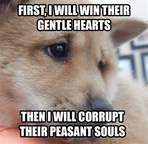 Shiba Memes - an adventurous life the shiba inu puppy a new meme just for you