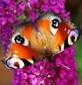 Photo by Virgil Webb | Beautiful butterflies, Moth, Animal ...