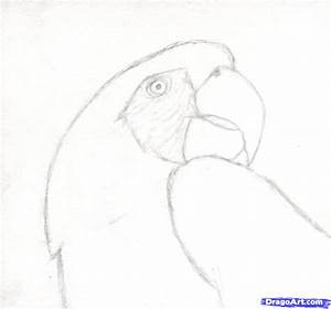 How to Draw a Realistic Parrot, Scarlet Macaw, Step by ...