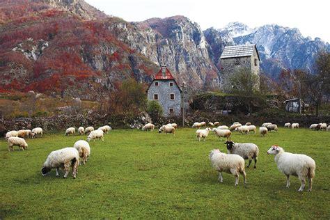 cuisine living albania mania modern farmer