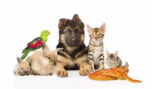 Veterinary Care - Veterinarian Treatments & Services for ...
