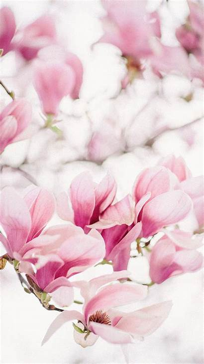 Magnolia Iphone 6s Khegay Sonya